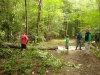 holliston-rail-trail-boy-scouts-tree-cutting