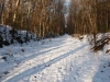 holliston-trail-winter-path