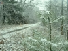 holliston-rail-trail-winter